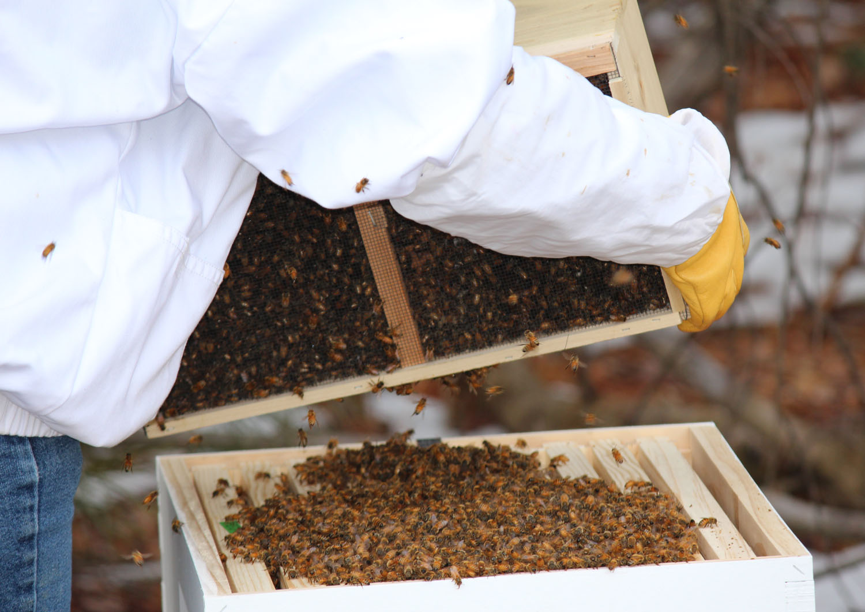 2013_BeeHive-Launch006