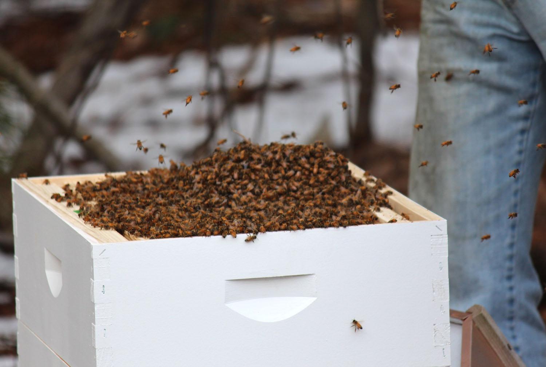 2013_BeeHive-Launch007