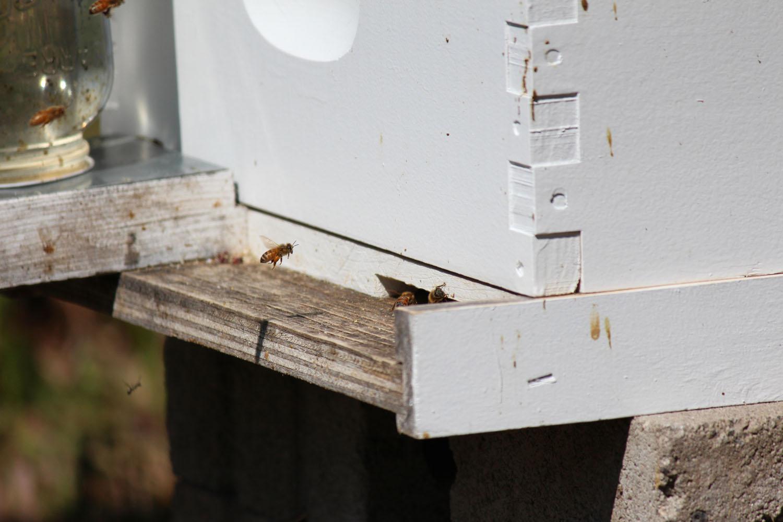 Bee Check - April 28 2013